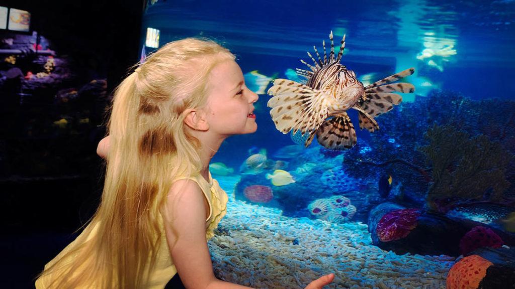 Gardaland SEA LIFE Acquarium