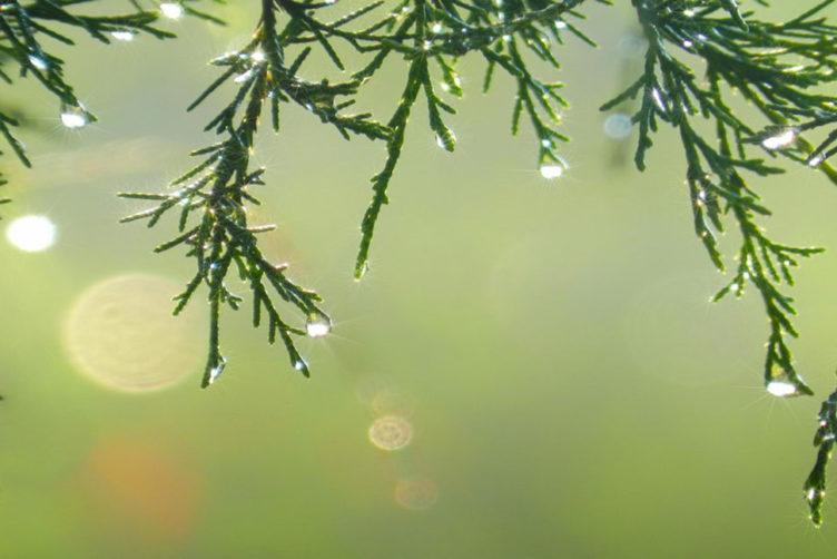 Addobbi di Natale eco friendly_ Ricominciodaquattro