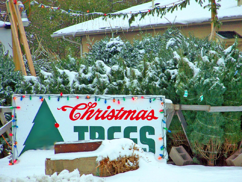 Da inizio dicembre fino all'Epifania molte case si accendono, ma pochi pensano allo spreco di