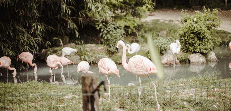 Parco Natura Viva con Groupon Ricominciodaquattro